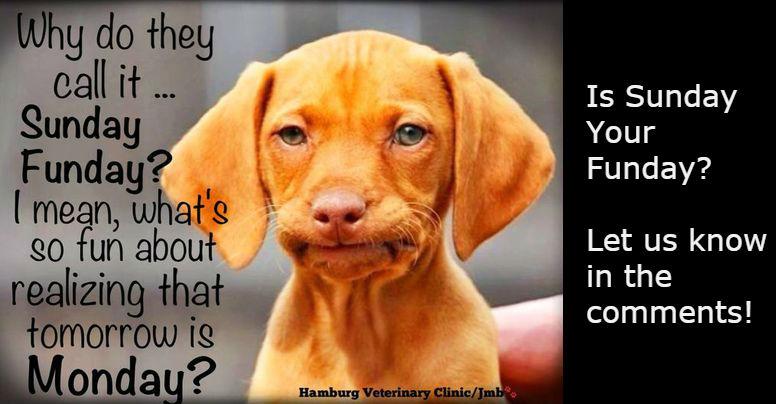 Sunday Funday dog meme