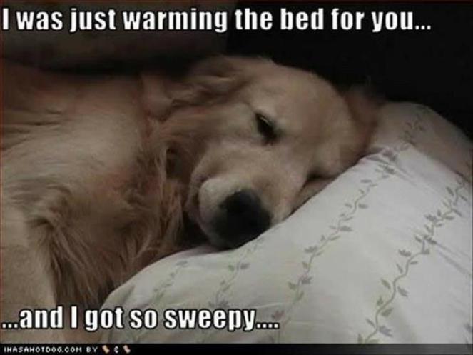 Dog Bed Warmer