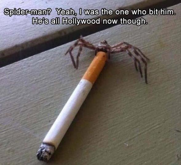 Spiderman's Spider