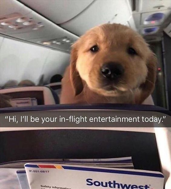 Flight Dog