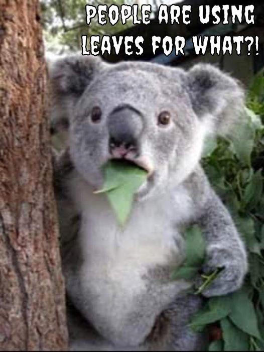 covid-tp-koala