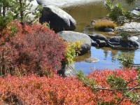 Red ground cover near the Tuolumne River