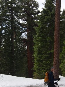 Tom with the Grizzly Giant in the background