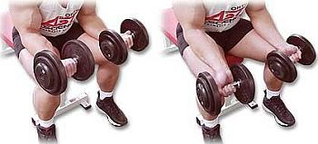 palm-up-seated-dumbbell-wrist-curls-forearm.jpg