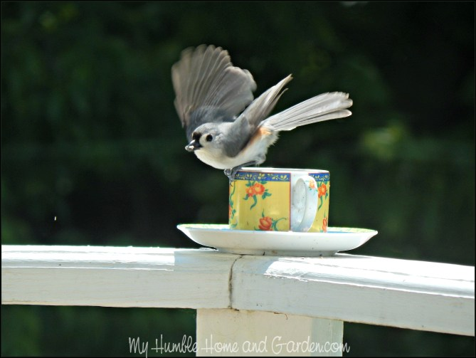 Backyard Bird Feeder - Make Your Own Teacup Bird Feeder - tufted titmouse on MyHumbleHomeandGarden.com