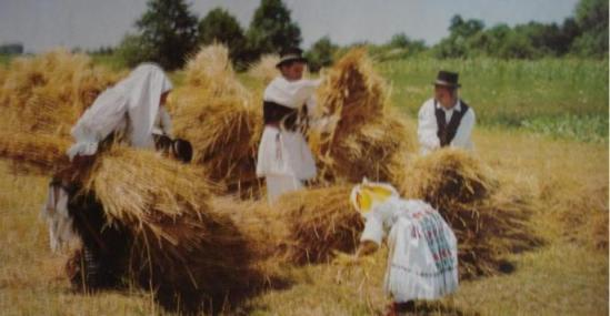 Tradicionalna Slavonska žetva