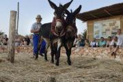 Sadnja i obrada pšenice u Dalmaciji