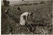 Narodni fizički poslovi, kopanje i okopavanje
