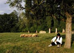 strai poslovi dalmacije, čuvanje ovaca