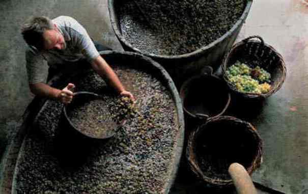 Sve što trebate znati o berbi grožđa i pripremi vina