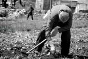 Poljodjeljstvo u životu naših starih