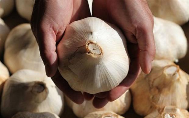 Ljekovita svojstva češnjaka i korištenje češnjaka kao ljeka
