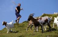 Mudra priča o pastiru i kozama