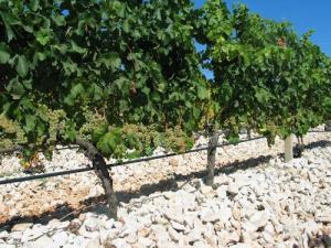 hercegovački vinogradi
