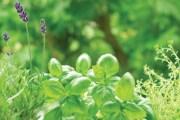 Savjeti za uzgoj vlastitog začinskog i ljekovitog bilja