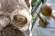 Cmrk ili tikva za vodu – stara svakodnevna pomagala –