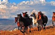 Konji u zaboravljenim narodnim vjerovanjima