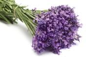 Ljekovita svojstva bilja, ljekovi naših baka - ljekovitost lavande