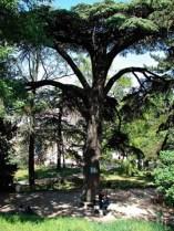 Jardin des Plantes 5