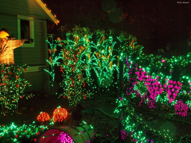 Scarecrow and Veggie Lights