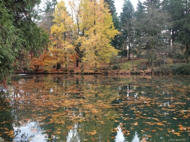 Laurelhurst Park Duck Pond