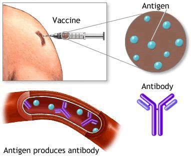 Hepatiitti Rokotus