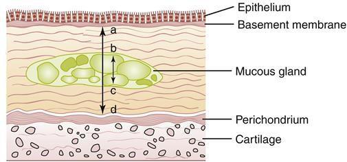 두께가 증가한 기관지의 점막의 과정의 과정