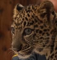Leopard-1024