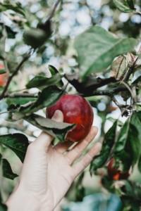 Take the family Apple or Pumpkin Picking near Staten Island New York City 2019