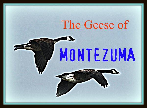 The Geese of Montezuma
