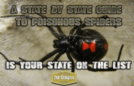 A state by state guide to venomous spiders