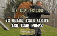 Prepping with Guard Dogs & Attack Dogs - Top 10 K9 choices