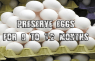Do this one thing and Preserve your chicken eggs (for over 9 months)