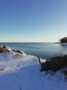 Viendo los cisnes desde la playa de Skäppevik