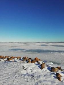 Vistas desde el embarcadero de Skäppevik