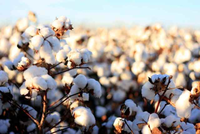 organic cotton pros and cons