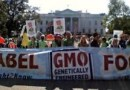House Votes To Ban States From Labeling GMO Foods, GMO'S are Safe