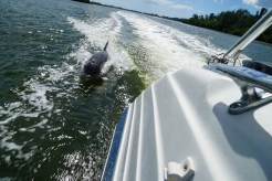 Dolphin_Starboard