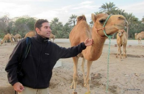 Besides the spitting, the camels in Bahrain were very friendly!
