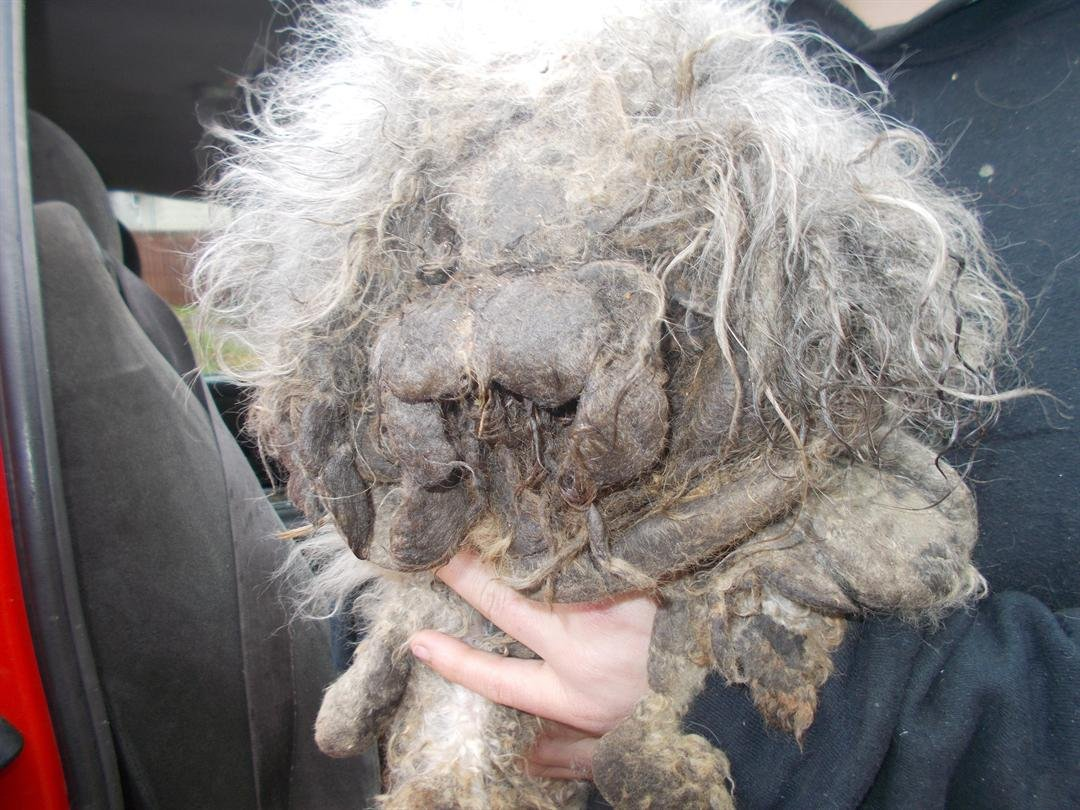 Three Charged After Firefighters Rescue Neglected Dog in