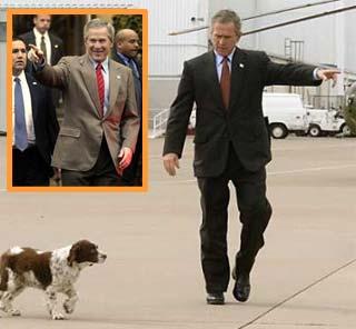bush-electorate-point.jpg