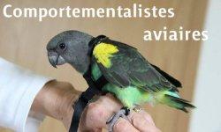 Comportementalistes-consultants aviaires