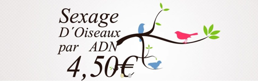 sexage adn 4.5 euros 1 - Cheap and reliable parrot DNA sexing