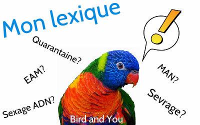 Lexique associé aux perruches et perroquets