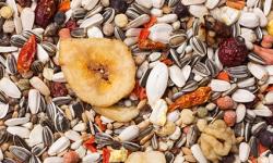 Les graines sont-elles toxiques