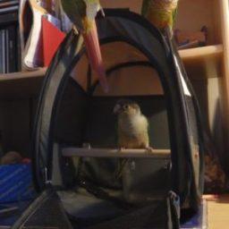 garde des oiseaux
