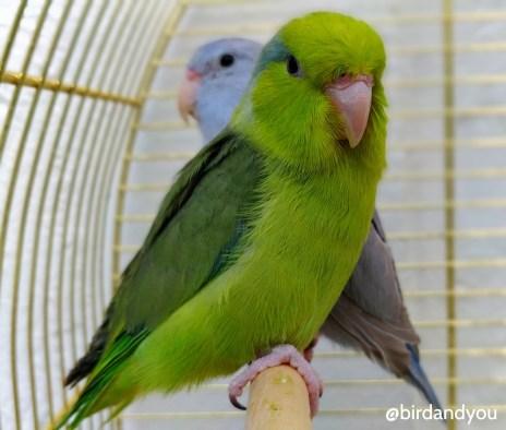 couple toui celeste 1 birdandyou
