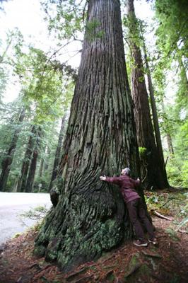 treehugger2.jpg