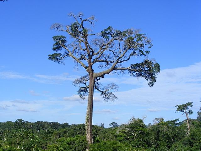 Ein Baum in Kamerun