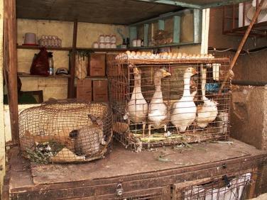 Gaense befinden sich im Kaefig auf einem Markt in Kamerun